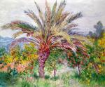 palm-tree-at-bordighera-claude-monet